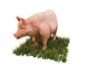 3D model Pig With Hairs