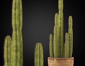 3D Plants collection 255