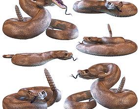 Rattlesnake 3D model PBR