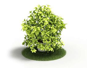3D model Potted Vine Plant