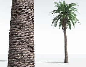EVERYPlant Date Palm 01 -- 10 Models