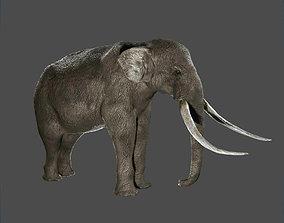3D asset game-ready Elephant