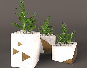 3D Plant Money Tree