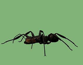 Soldier ant 3D model
