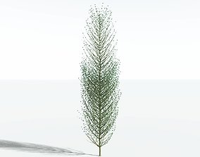 EVERYPlant Twisted Horsetail Tree SINGLE --1 Model-- 3D