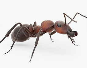 Rigged Ant 3D asset