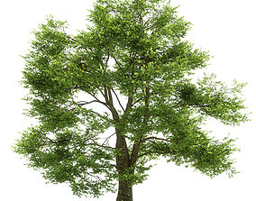 trunk Oak tree 3D model