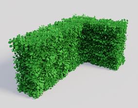 Fagus sylvatica 3D model