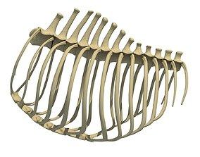 Animal Rib Cage 3D model