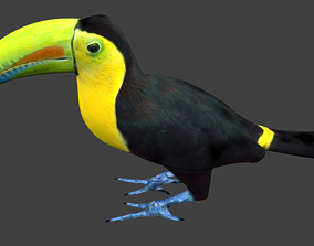 3D model low-poly lowpoly bird