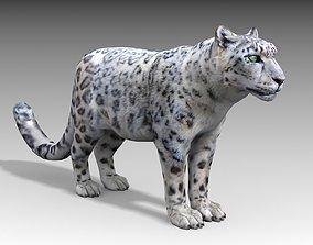 Snow Leopard 3D asset