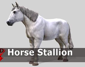 Horse Stallion 3D asset