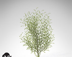 XfrogPlants Purple Willow 3D model