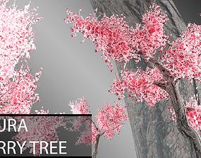 Sakura Tree 3D asset