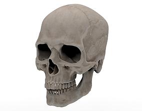 Human Skull models 3D asset VR / AR ready