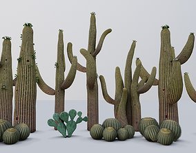 3D model cactus - Game Ready - VR AR