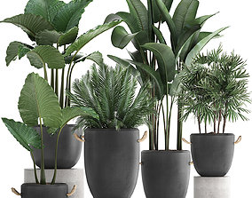 Collection of exotic palm trees in concrete pots 415 3D