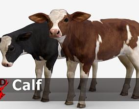 Calf realistic 3D model
