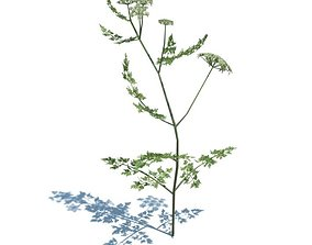 3D model Poison Parsley Plant