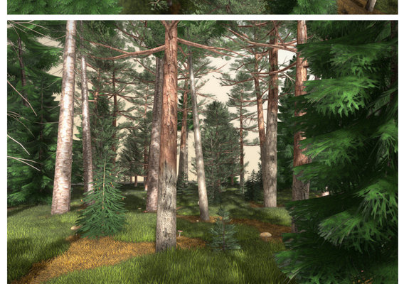 Mixed forest (Pines and Spruces)