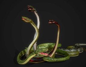 3D model Snakes - Boa