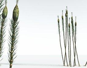 3D EVERYPlant Suckows Horsetail Tree 09 --16 Models--