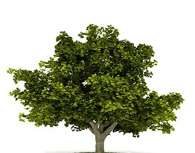leaf 3D model Mature Tree With All Leaves