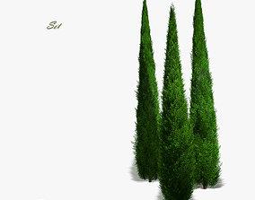 3D model Juniper columnar