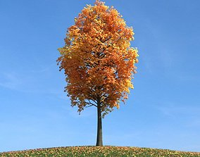 3D Mature Tree With Orange Leaves