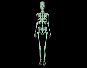 Skeleton 3D printable model medical
