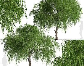 Set of Chinese Elm or Ulmus parvifolia Trees - 2 Trees 3D