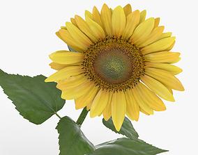 3D model vegetation Sunflower