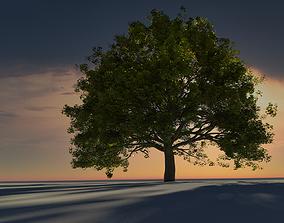 forest Old Oak Tree 3D