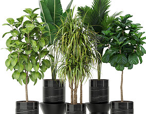 3D model Plants collection 379