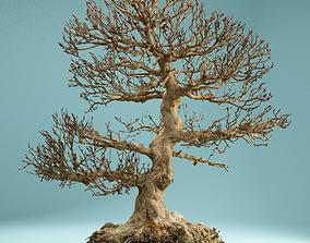 RAW SCAN Dead Bonsai Tree High Poly 01 3D model
