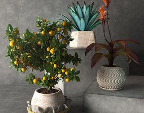 Tropical plants 3D