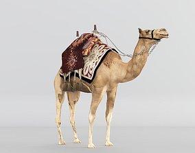 3D Camel asia