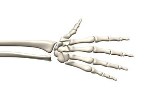 Skeleton hand human 3D