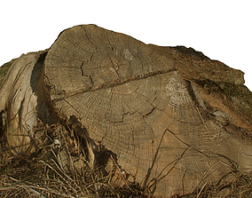 Tree Stump 3D asset VR / AR ready