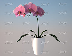 Pink Orchid 3D
