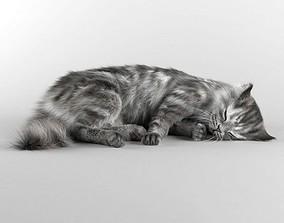 3D asset High Definition Cat