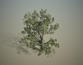 cluster 3D model Broadleaf - Hero field