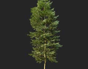 3D model Tree Realistic