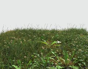 3D model Ryegrass Meadow Patch