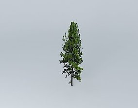 Pine Tree 3D model conifer