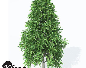 XfrogPlants Turkish Hazel 3D