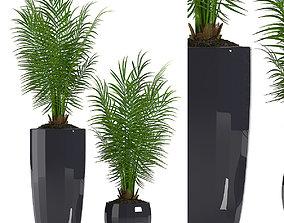 PARLOUR PALM PLANTS 2 3D