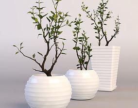 3D model Rose in pot
