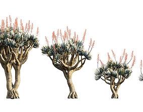 3D Aloe plicatilis - Fan Aloe - 01