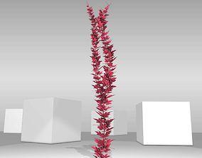 3D asset Wild Wine Vine - Parthenocissus - Autumn - 2